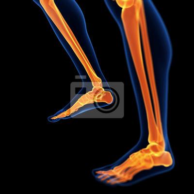 3d ilustración médica de los huesos del pie y de la pierna pinturas ...