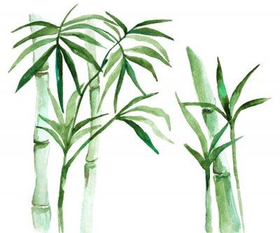 Cuadro Acuarela de bambú ilustración
