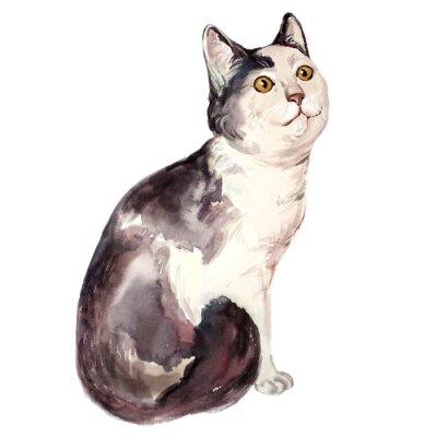 Cuadro Acuarela ilustración de gato feo mirando confundido