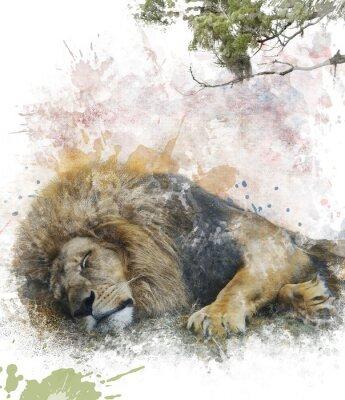 Cuadro Acuarela Imagen De León Dormido