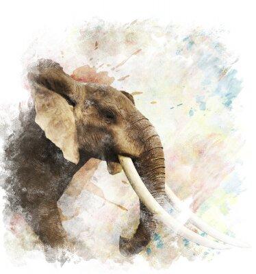 Cuadro Acuarela Imagen Del Elefante
