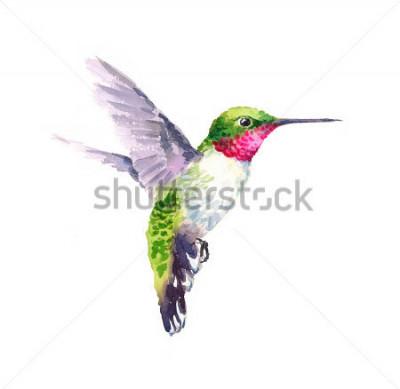 Cuadro Acuarela pájaro colibrí vuelo mano a mano ilustración jardín de verano aislado sobre fondo blanco
