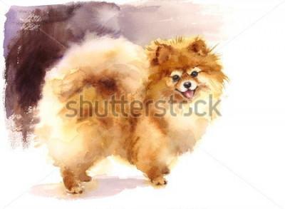 Cuadro Acuarela perro Pomerania retrato pintado a mano animales lindos mascotas ilustración