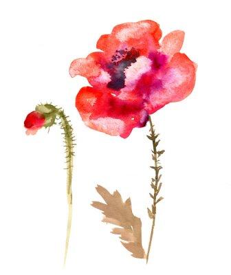 Cuadro Amapola de la flor de la acuarela