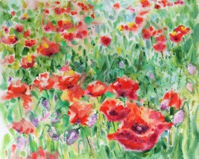 Cuadro Amapolas rojas flores de fondo, acuarela.