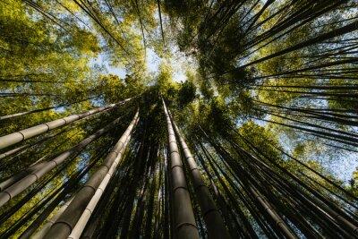 Cuadro Amplio ángulo de visión de bosque de bambú