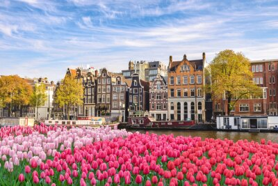 Cuadro Amsterdam Netherlands, city skyline Dutch house at canal waterfront with spring tulip flower