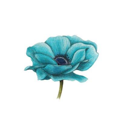Cuadro Anémona azul