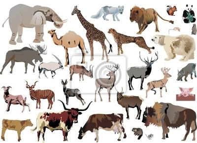 animales de color establecidos