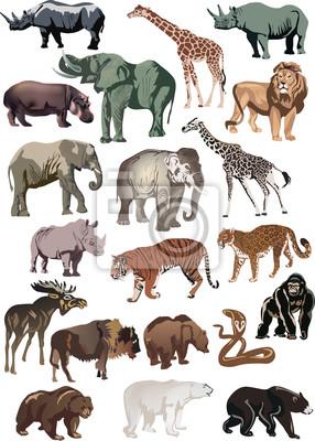 animales de color gran colección