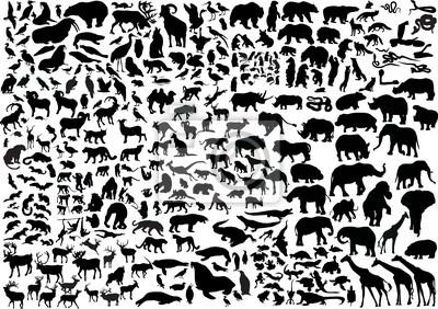 Cuadro animales enormes siluetas colección