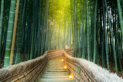 Cuadro Arashiyama Bosque de bambú
