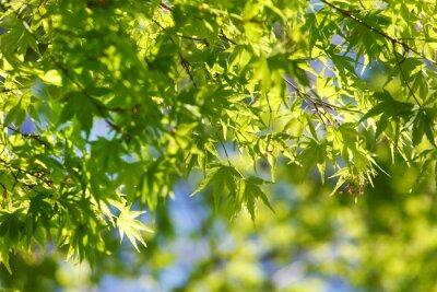 Cuadro Árbol de primavera