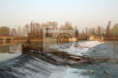 Árbol seco viejo en un río