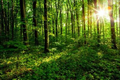 Cuadro árboles forestales