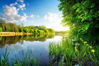 Cuadro Árboles por el río tranquilo