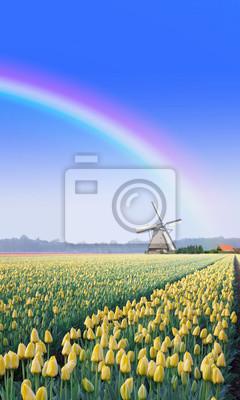 Arco iris sobre la granja de tulipanes en Holanda