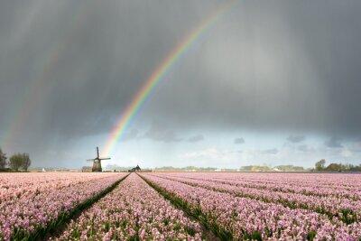Arco iris sobre molino de viento y campos de flores