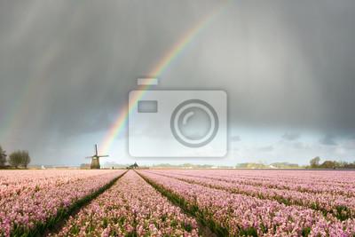 Arcoiris sobre molino de viento y campos de flores
