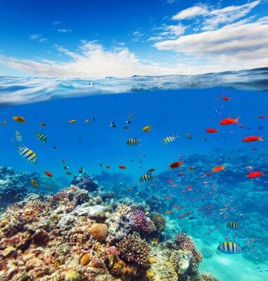 Cuadro Arrecife de coral submarino con horizonte y olas de agua