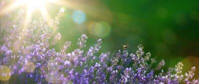 Cuadro arte verano o primavera hermoso jardín con flores de lavanda