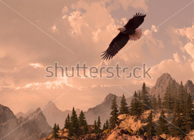 Cuadro Bald eagle soaring in the Rocky Mountain high country.
