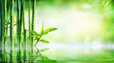 Cuadro Bambú Antecedentes - exuberante follaje con la reflexión en el agua
