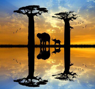 Cuadro Baobab y el elefante en la puesta del sol