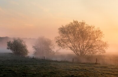 beautiful misty sunrise over trees by river