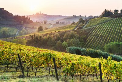 Cuadro Beautiful valley in Tuscany, Italy. Vineyards and landscape with San Gimignano town at the background.