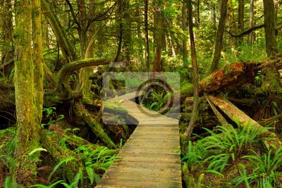 Boardwalk through lush rainforest, Pacific Rim NP, Vancouver Island, Canada