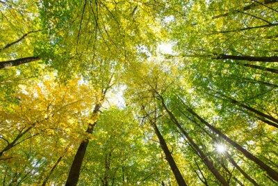 Cuadro bosque