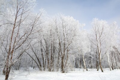 Cuadro Bosque de invierno