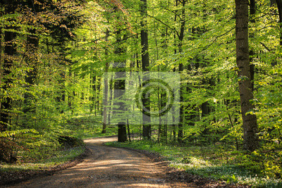 Bosque de primavera