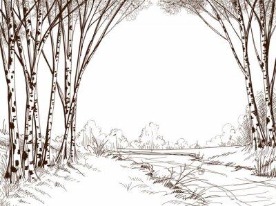 Cuadro Bosque del árbol de abedul, gráfico de fondo