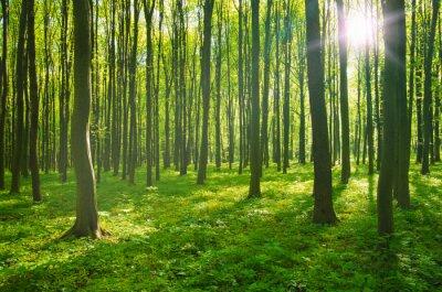 Cuadro Bosque en primavera