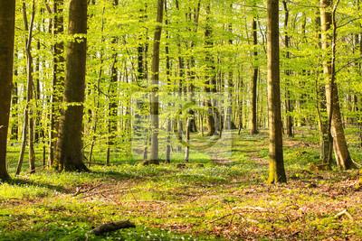 Bosque primaveral