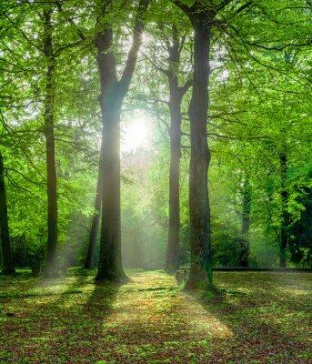 Cuadro bosque verde en verano con luz de fondo