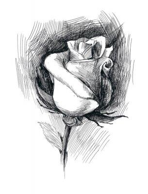 Cuadro bosquejo de la flor