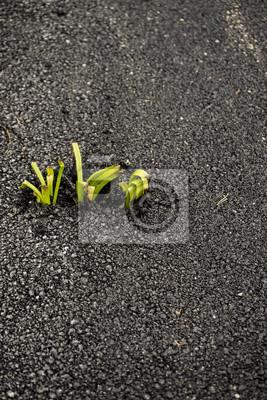 Breakthrough Natural Power