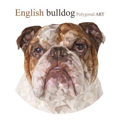 Cuadro Bulldog inglés. Dibujo poligonal ..