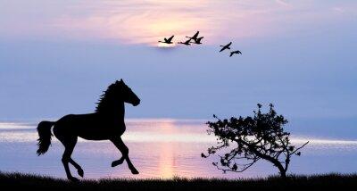 Cuadro Caballo corriendo por el lago