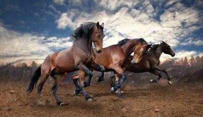 Cuadro caballos bayos salto salvaje