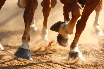 Cuadro Caballos de caballos corrientes
