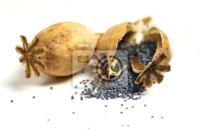 Cuadro cabeza de amapola y semillas en el fondo blanco