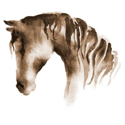 Cuadro Cabeza de caballo mojada de la acuarela. Caballo marrón pintado a mano en blanco.