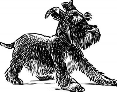 Cuadro Cachorro schnauzer