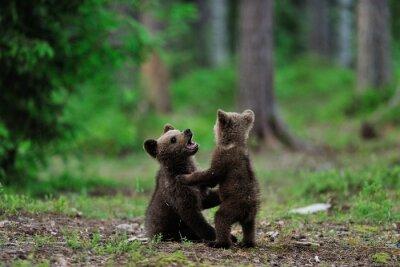 Cuadro Cachorros de oso de Brown que juegan en el bosque