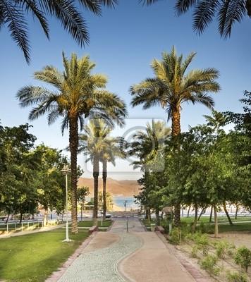 Callejón de la palma en Eilat - famosa ciudad turística en Israel