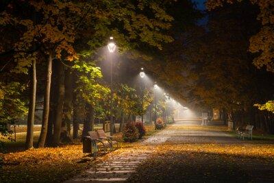 Cuadro Callejón otoñal en el parque por la noche en Konstancin Jeziorna, Mazowieckie, Polonia
